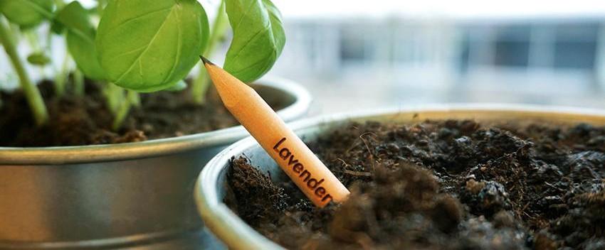 Sprout_lapiz_sostenible_planta_semillas