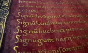 codice purpura