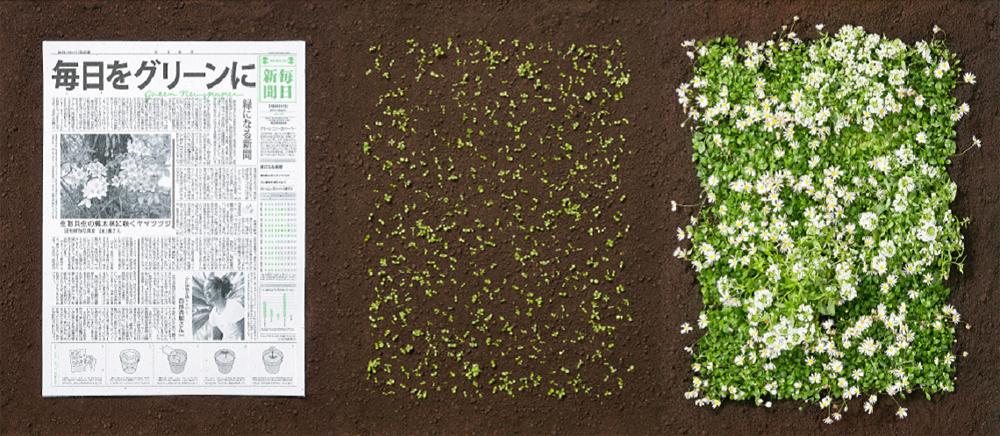 seeds copy